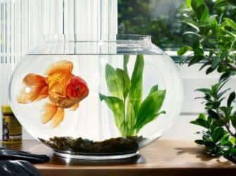 Как перевезти аквариум и сберечь в целости и сохранности всех его обитателей