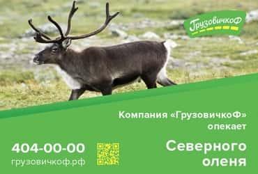 Компания «Грузовичкоф» будет «опекать» северного оленя, тукана и якутского быка из Ленинградского зоопарка