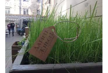 «ГрузовичкоФ» помог озеленить город